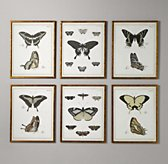 Butterfly Book Art