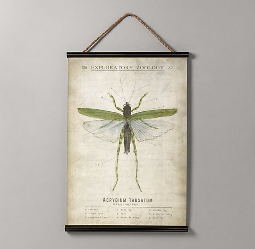 Entomology Tapestry - Grasshopper