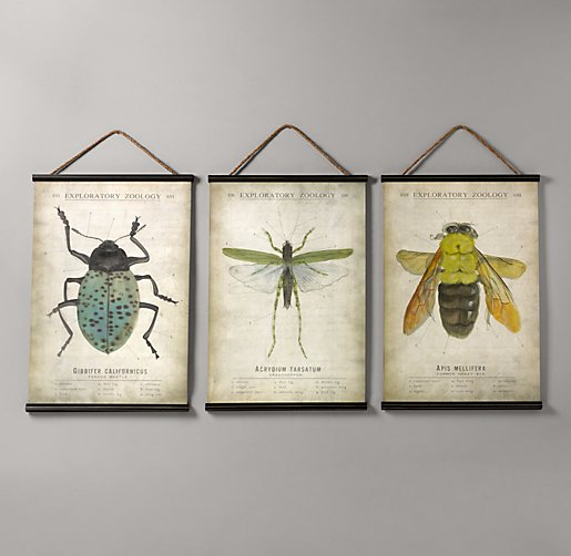 Entomology Tapestry Set of 3
