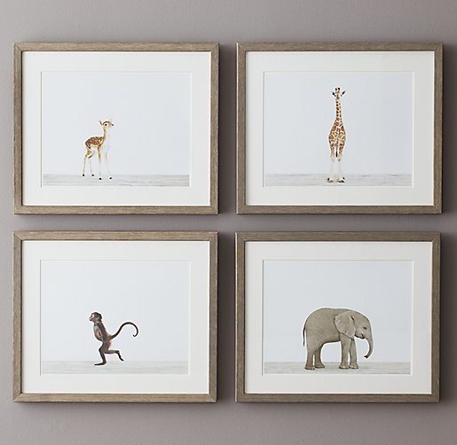 Baby Animal Portraits