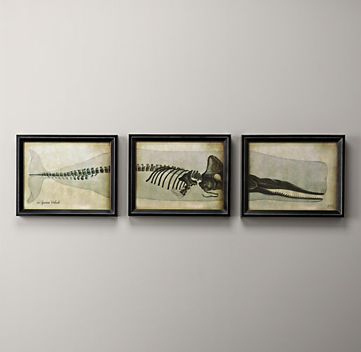 Whale Skeleton Art