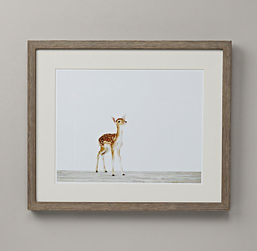 Baby Animal Portrait - Deer