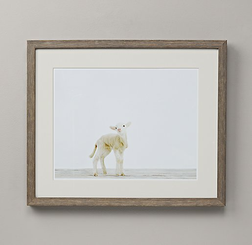 Baby Animal Portrait - Lamb