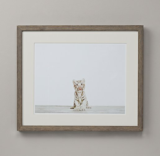 Baby Animal Portrait - Tiger