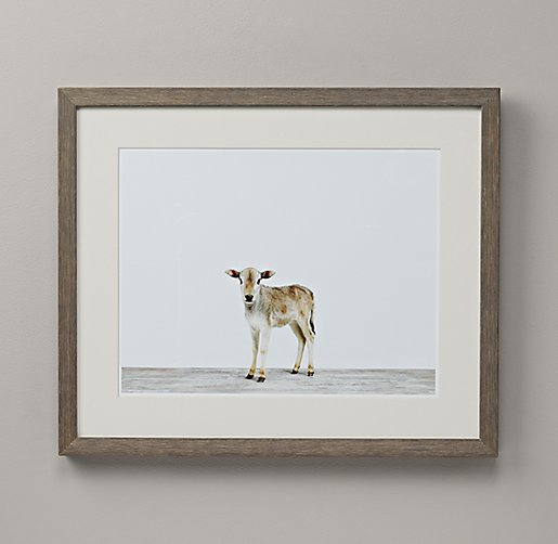 Baby Animal Portrait - Zebu