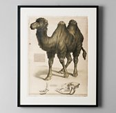 African Animal Art - Camel