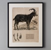 African Animal Art - Goat