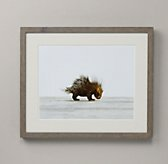 Baby Animal Portrait - Porcupine