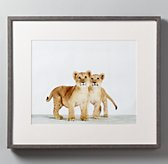 Animal Portrait - Lion Cubs