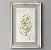 Pressed Botanical Art - White Chrysanthemum