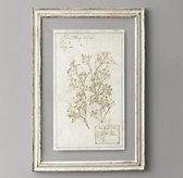 Pressed Botanical Art - Arenaria