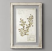 Pressed Botanical Art - Purple Chrysanthemum