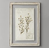 Pressed Botanical Art - Tara Allison Hybrida