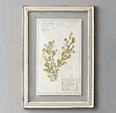 Pressed Botanical Art - Lobularia