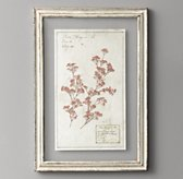 Pressed Botanical Art - Gypsophilia
