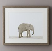 Baby Animal Portrait - Elephant