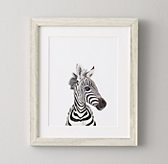 Baby Animal Close-Up Portrait - Zebra