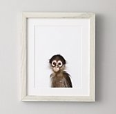 Baby Animal Portrait - Monkey