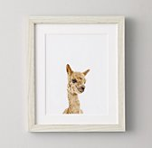 Baby Animal Portrait - Alpaca