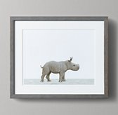 Baby Animal Portrait - Rhino